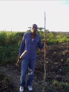 Dan and Sugar Cane